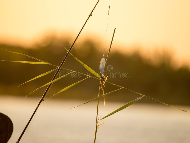 Bulrush ένωση σε ένα θέλγητρο στο ηλιοβασίλεμα στοκ εικόνες με δικαίωμα ελεύθερης χρήσης