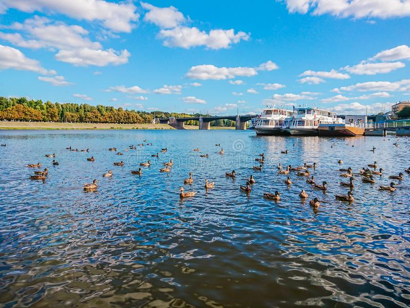 Bulwar rzeczny Volga w Tver, Rosja Jesień słoneczny dzień Przyjemności łodzie przy molem Dziki Mallard kaczek pływanie w rzece zdjęcie stock