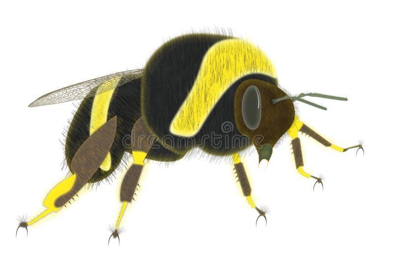 Bumble Bee. Illustration isolated on white background stock illustration