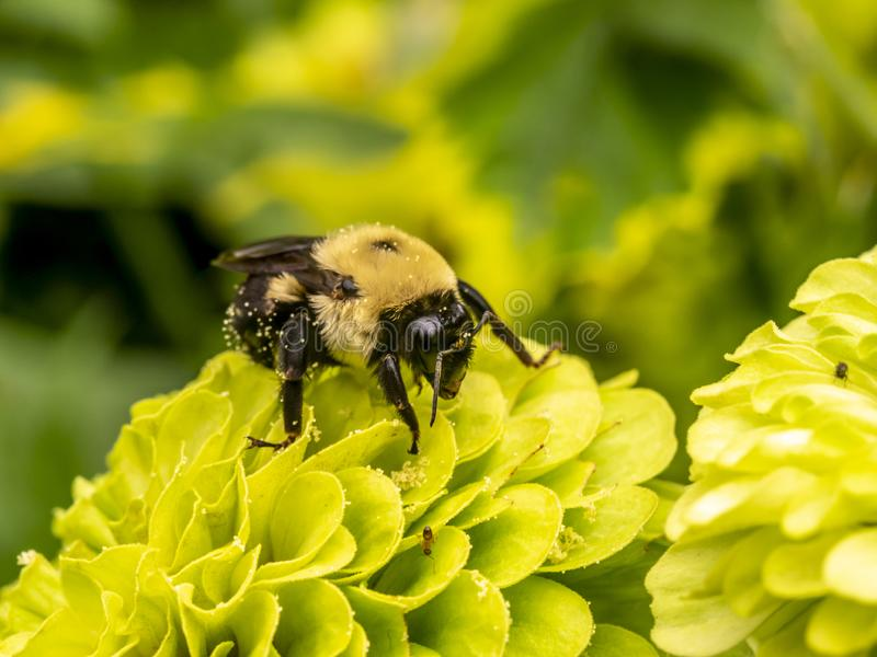 Bumble bee in summer stock photos