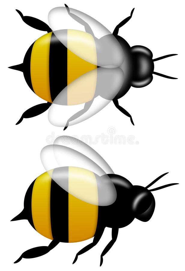 Bumble Bee Top and Side View Isolated on White royalty free illustration