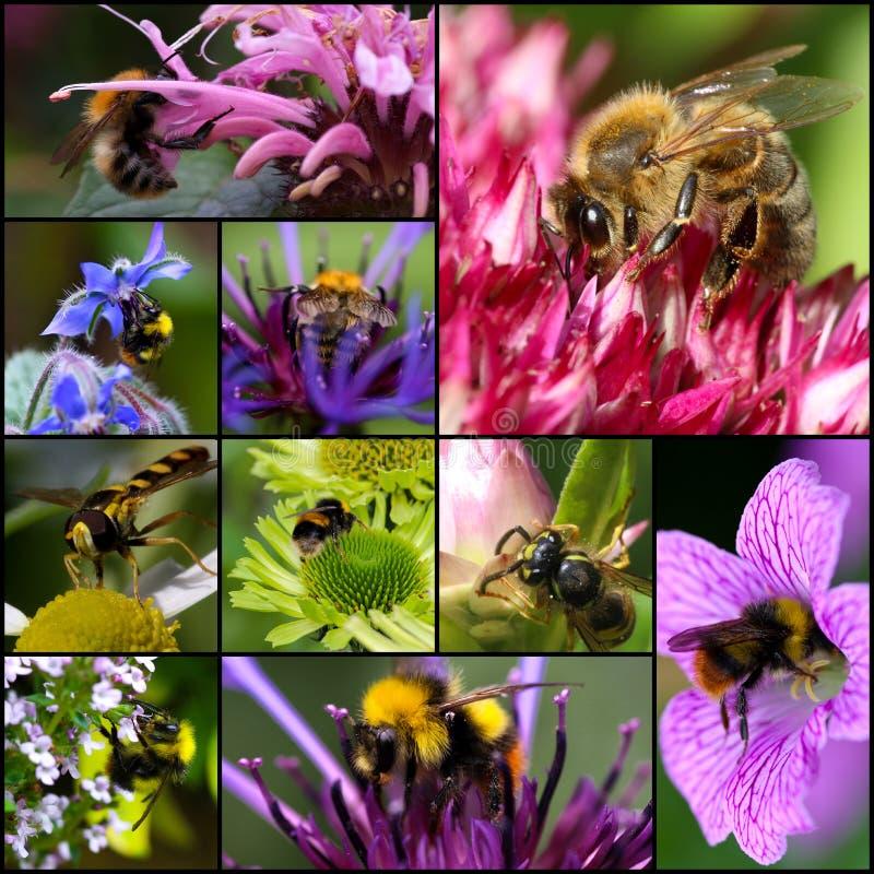 Bumblebee τα λουλούδια επικονίασης σφηκών μελισσών καθορισμένα το κολάζ στοκ εικόνα με δικαίωμα ελεύθερης χρήσης