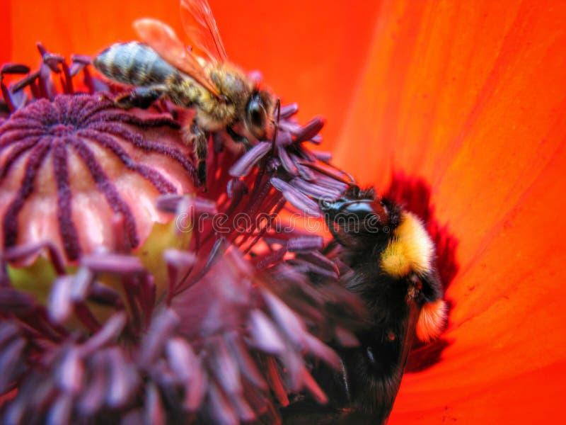 bumblebee στοκ φωτογραφία με δικαίωμα ελεύθερης χρήσης