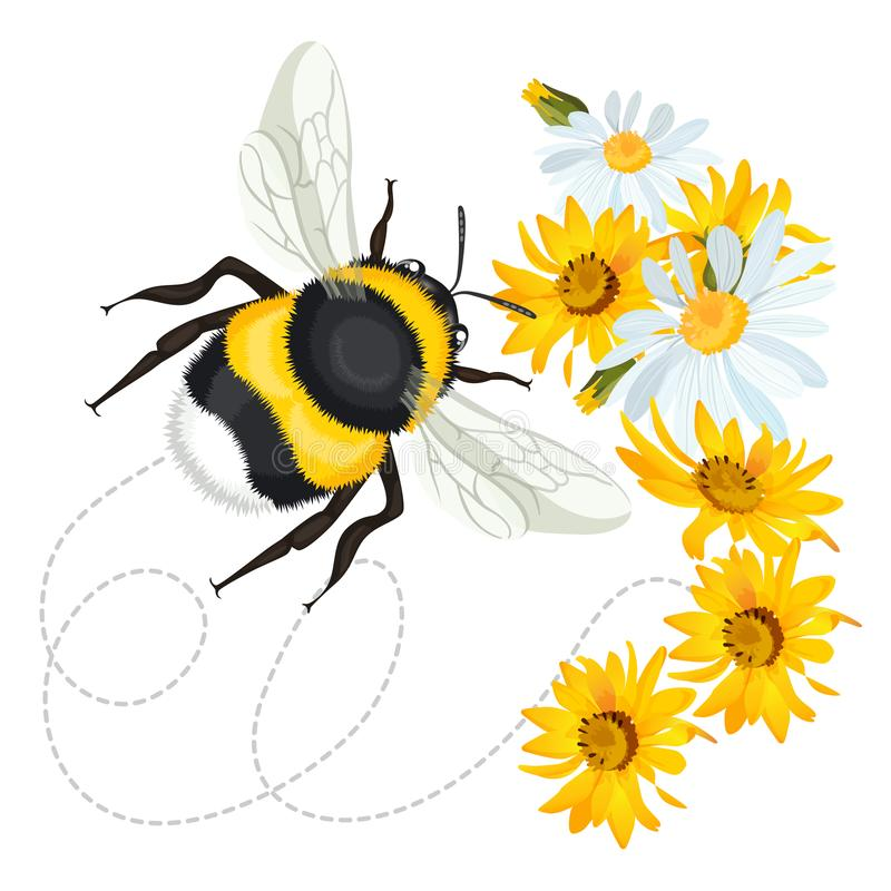 Free Bumblebee Closeup Head, Trace Swirled Line On Background Arnica Chamomile Royalty Free Stock Photos - 101109478