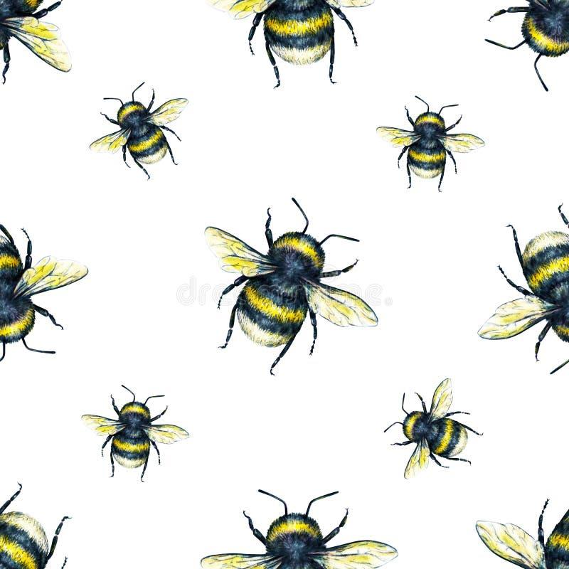 Bumblebee na białym tle Akwareli natury rysunek Insekt sztuka handwork bezszwowy wzoru ilustracja wektor
