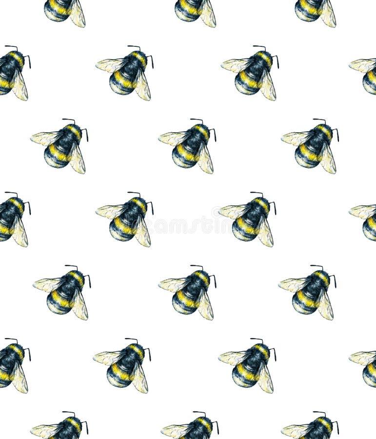 Bumblebee na białym tle banki target2394_1_ kwiatonośnego rzecznego drzew akwareli cewienie ilustracja wektor