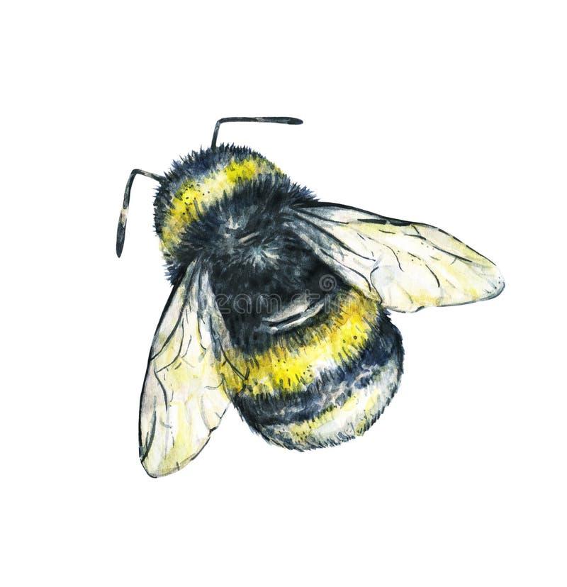 Bumblebee na białym tle banki target2394_1_ kwiatonośnego rzecznego drzew akwareli cewienie Insekt sztuka handwork bezszwowy wzor ilustracja wektor