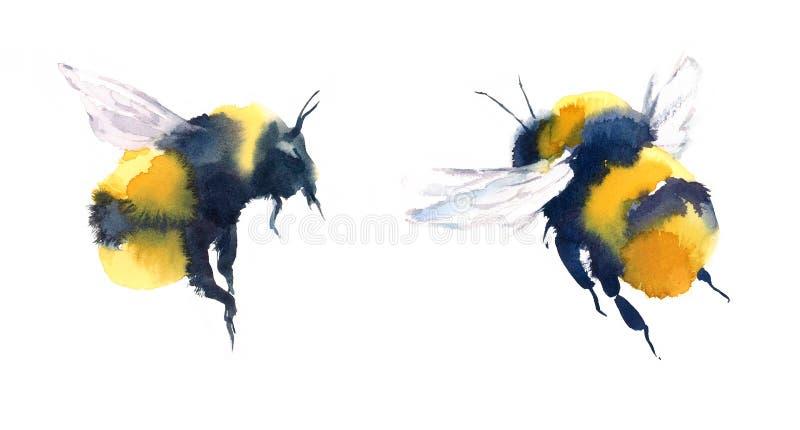 Bumblebees akwareli Ilustracyjna ręka Rysująca ilustracja wektor