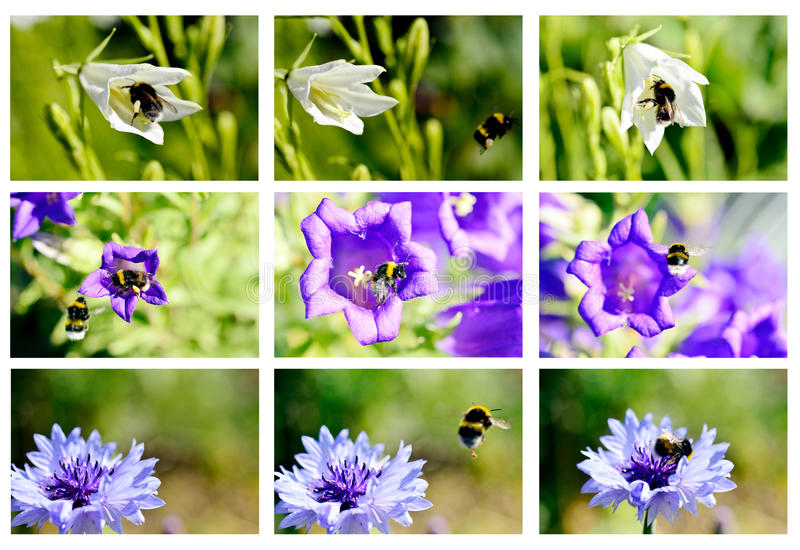 Bumblebees and flowers. A set with flowers and bumblebees royalty free stock images