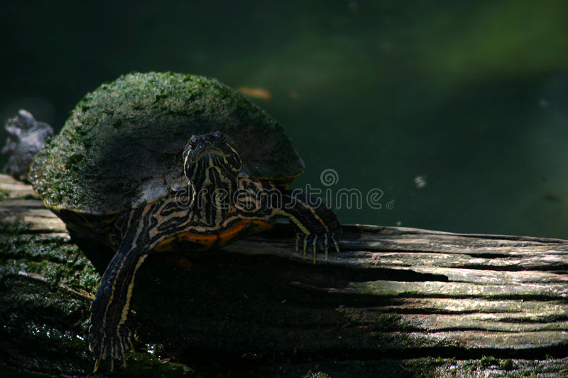 Bump on a log