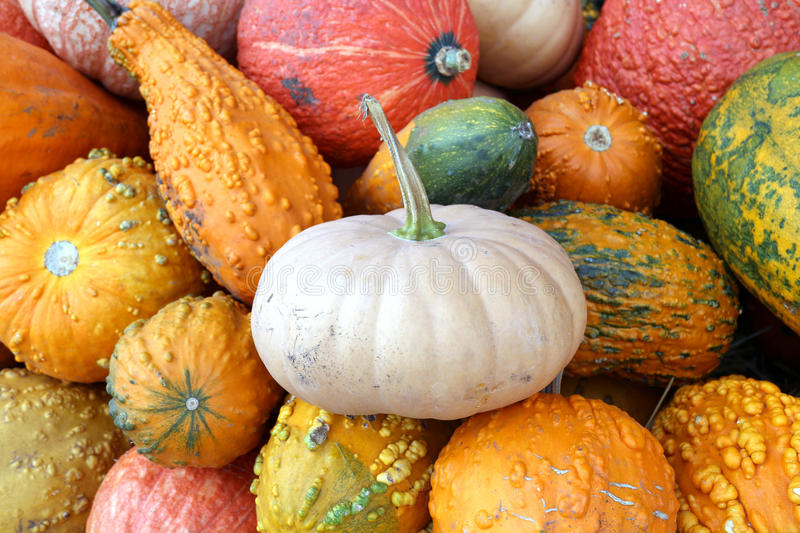 Bumpy gourd. Many kinds of bumpy gourd for Fall season royalty free stock photo