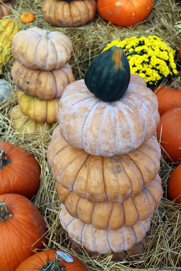 Bumpy gourd. Stack of decorative bumpy gourd for Fall season royalty free stock photos