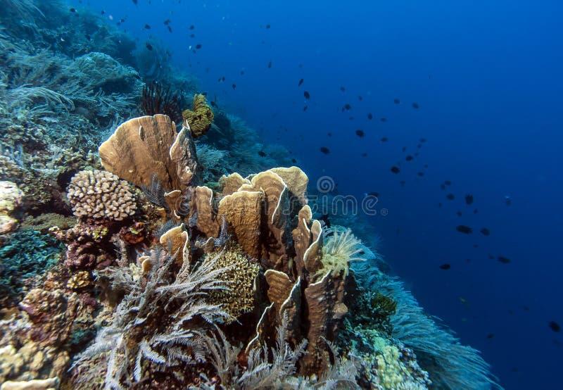 Bunaken medborgare Marine Park. Indonesien arkivbilder
