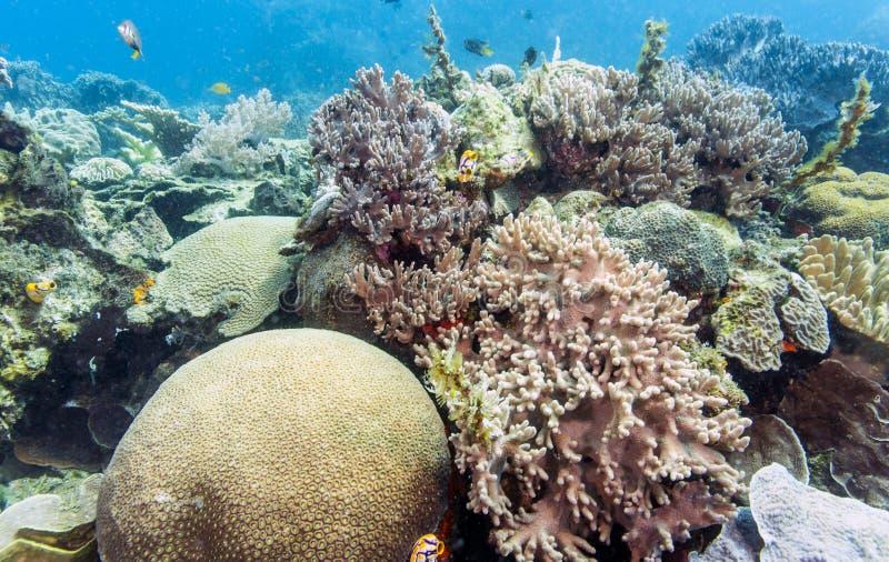 Bunaken medborgare Marine Park. Indonesien arkivbild