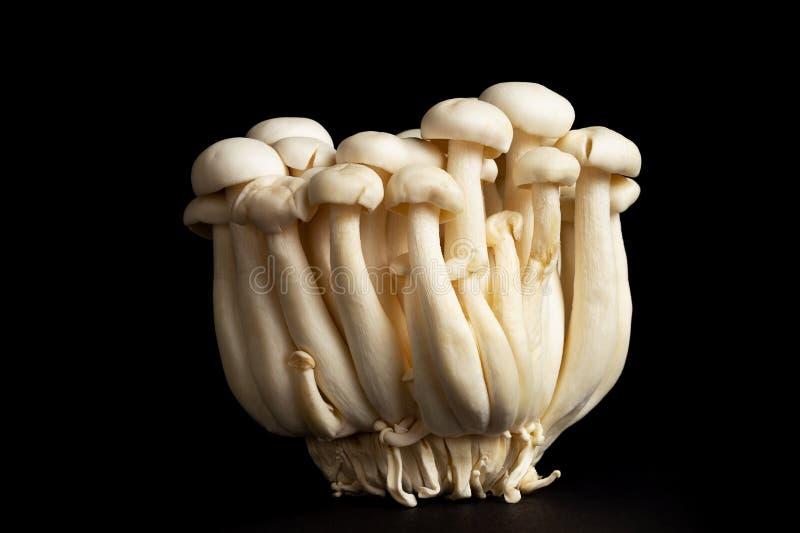 Bunapi-shimeji, or Japanese white beech mushrooms over a black background. Bunch uf buna-shimeji, or Japanese white beech mushrooms isolated over a black stock images