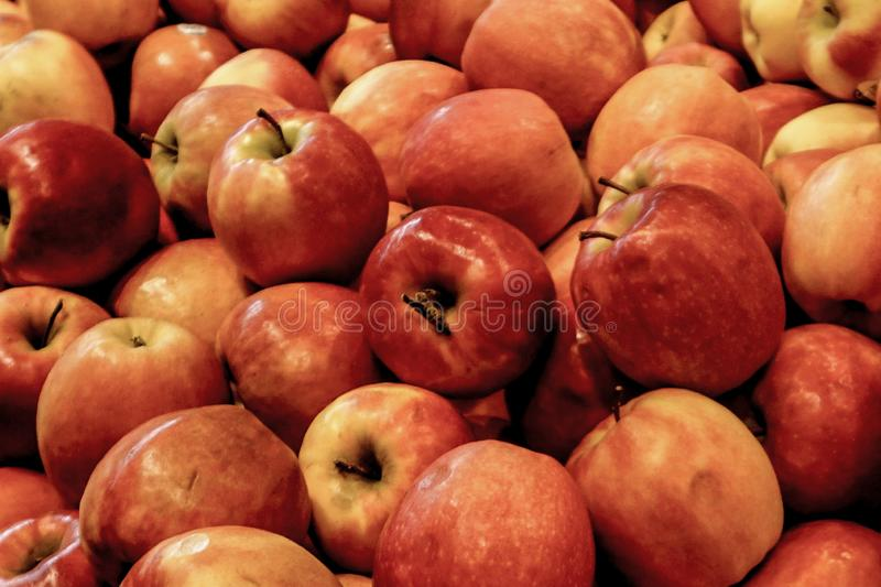 Bunch of Apples. Apples Red Yellow bright fun many stalks fruit basket bowl of fruit stock photos