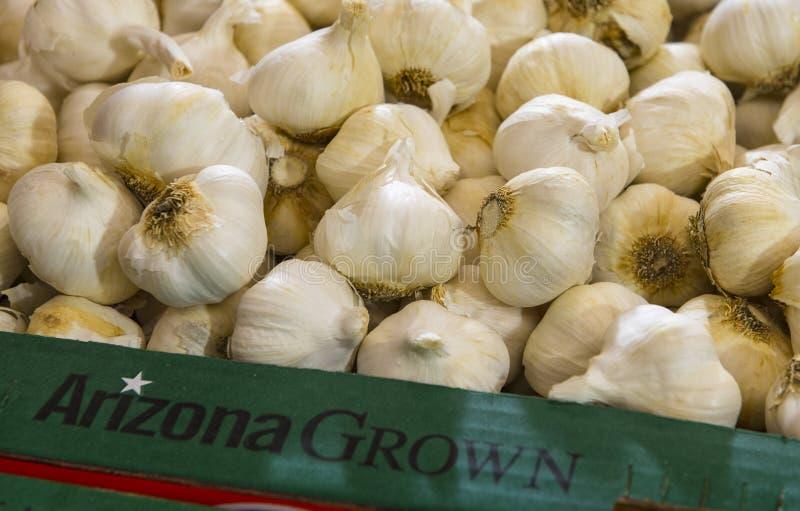 A bunch of Arizona Grown Garlic. Arizona Grown Garlic at farmers market stock photos