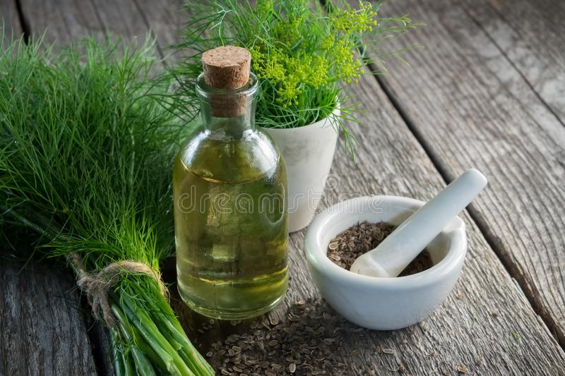Bunch of aromatic fresh green dill, mortar of fennel seeds and dill oil bottle. Bunch of aromatic fresh green dill, mortar of fennel seeds and dill oil bottle stock photos