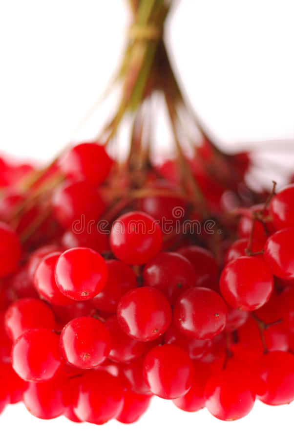 Download Bunch of ash-berry stock image. Image of backgrounds - 16453439