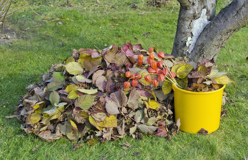Bunch of autumn leaves lying on the garden grass stock photography