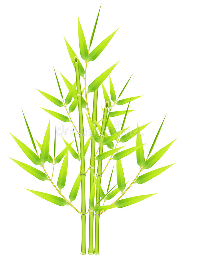 Download Bunch of bamboos stock vector. Image of asian, plant - 11610390