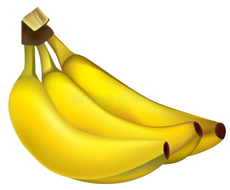 Download Bunch of bananas stock vector. Image of nobody, jungle - 19004691