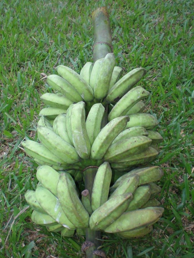 Bunch of Bananas stock photos
