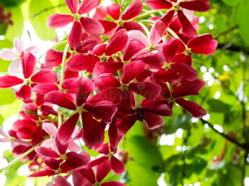 Bunch of beautiful flowers. royalty free stock photo
