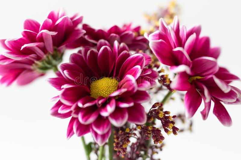 Bouquet of Pink Flowers on White Background royalty free stock photography