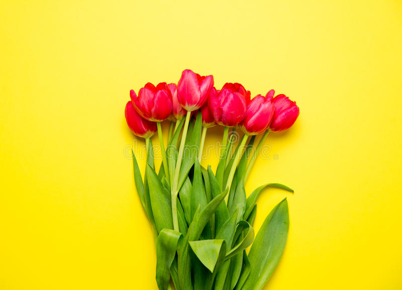 Bunch of beautiful red tulips lying on the wonderful yellow back stock photography