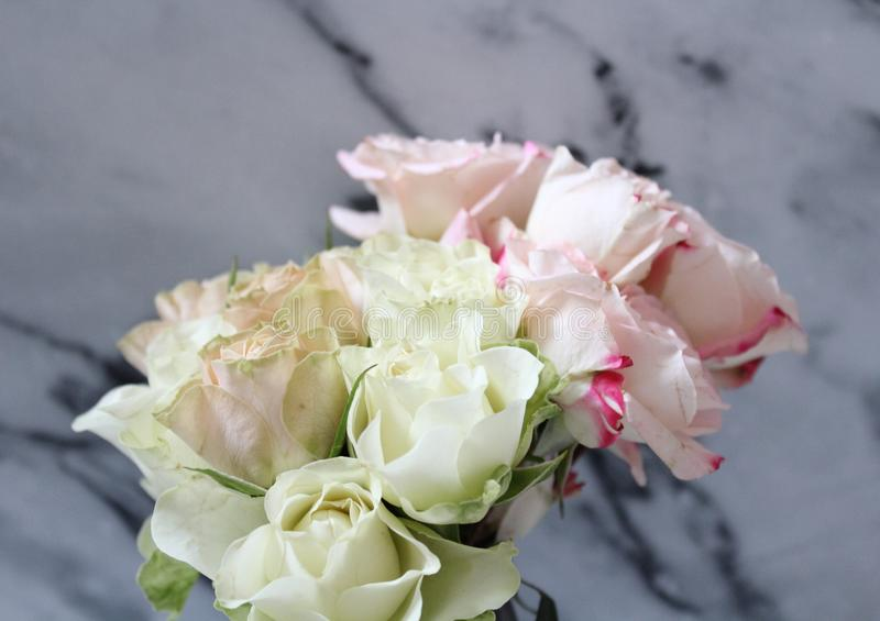 A bunch of beautiful roses stock image
