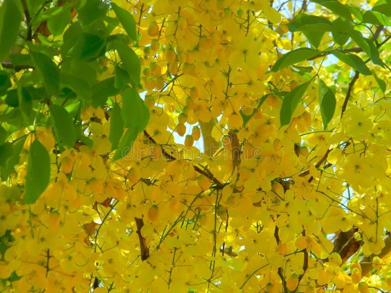 Bunch of beautiful yellow flowers stock image