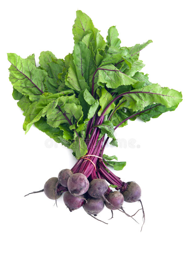 Download Bunch of Beetroot stock photo. Image of leaves, food - 22310794