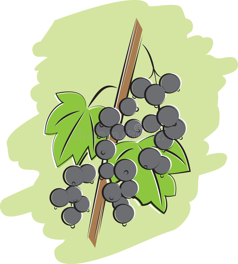 Bunch Of Black Currant Illustration Stock Photography