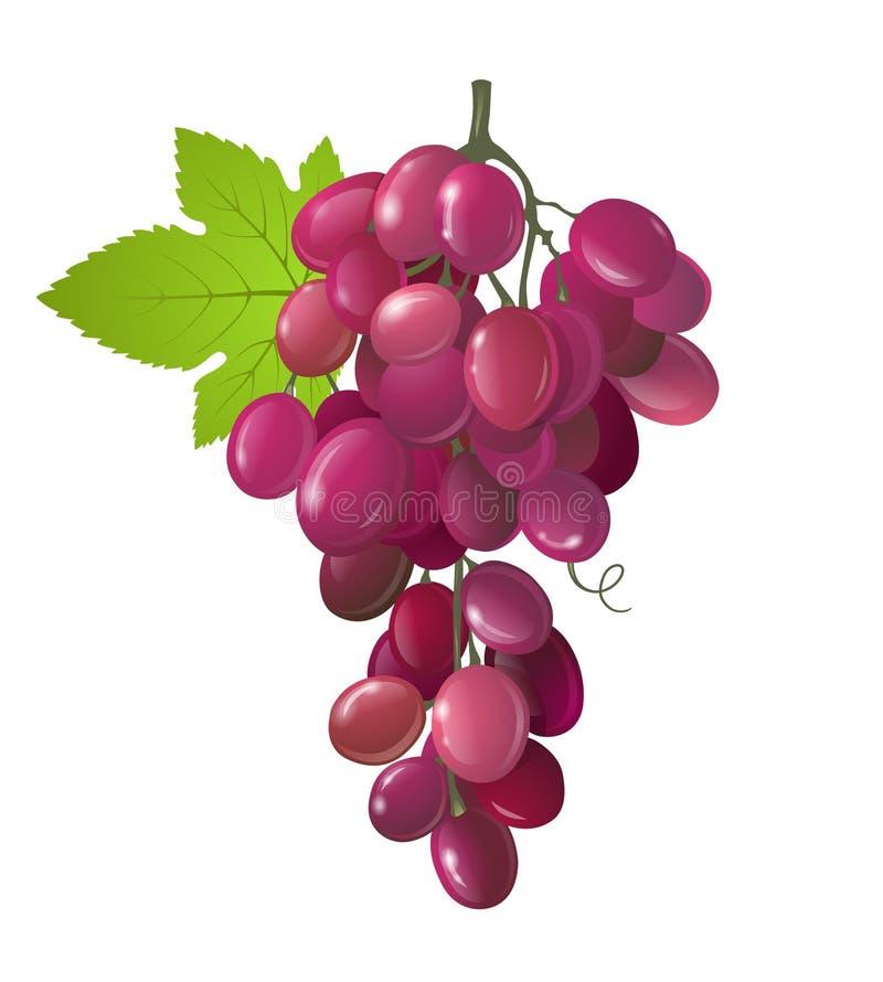 Grapes stock illustration