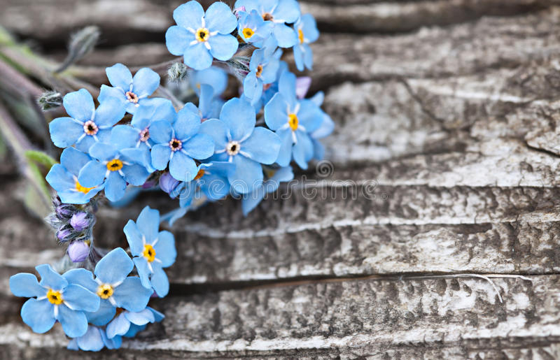 Bunch of blue forget me not flower stock photos