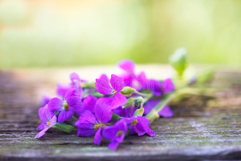 A bunch of blue violets stock photo