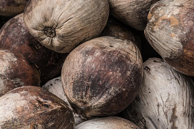 Bunch of brown palm fruits a set of nuts a weather-beaten natural background a tropical base royalty free stock photo