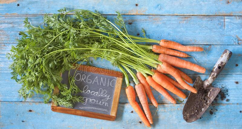 Bunch of carrots, vegetable produced without synthetic pesticides and chemical fertilizers, organic food, healthy eating concept. Flat lay composition stock images