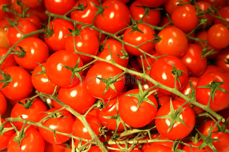 Bunch of cherry tomatoes. Bunch of red cherry tomatoes stock photos