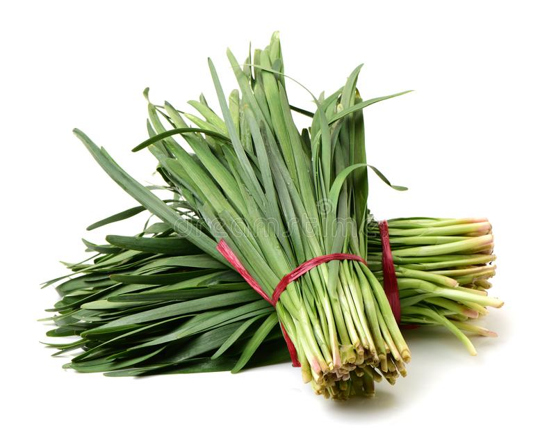 Bunch of Chinese leek royalty free stock image