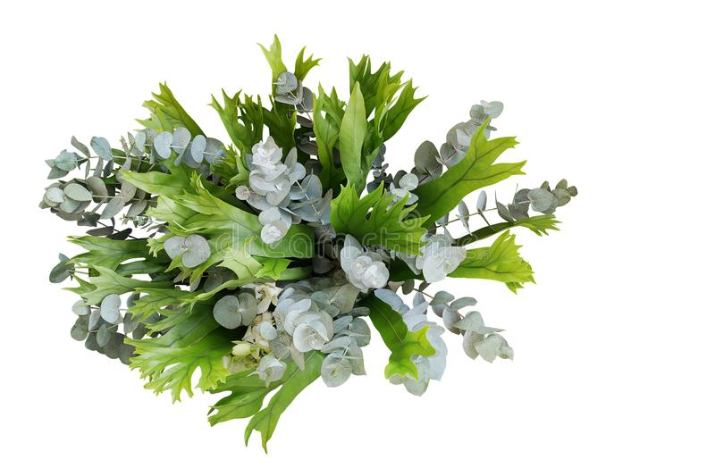 Bunch of climbing bird`s nest fern and Silver Drop eucalyptus le. Aves, tropical foliages plant flower bouquet floral arrangement isolated on white background royalty free stock photo