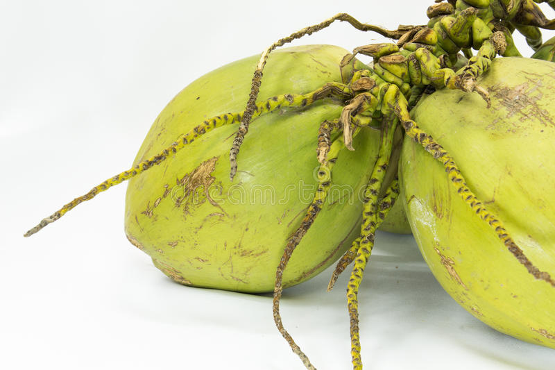 Download Bunch of coconuts stock photo. Image of detail, color - 32012256