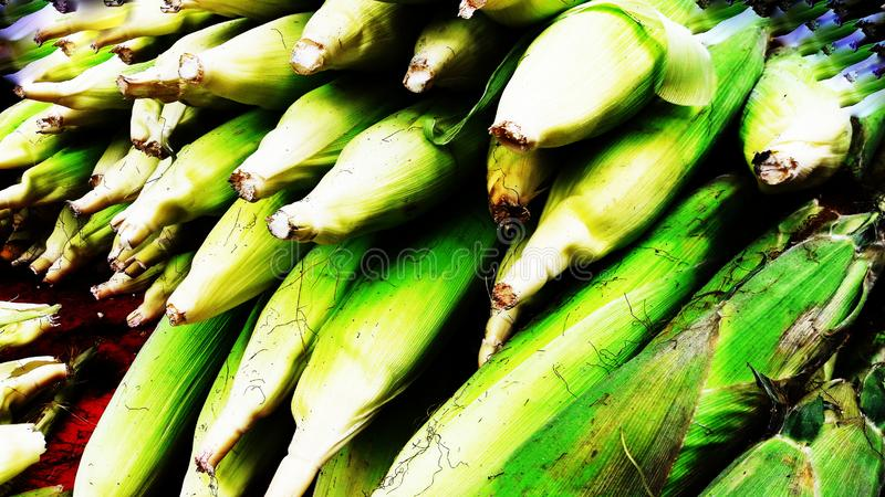 Bunch of corn closeup image. Alternative, ripe, nature, science, summer, growth, industry, plant, lifestyle, fuel, scene, snack, eating, sweetcorn, vibrant stock photo