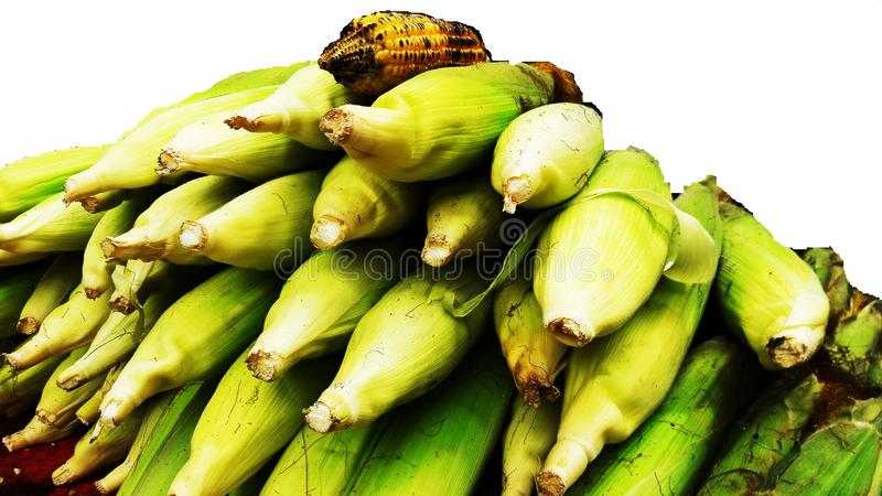 Bunch of corn closeup image isolated on white background. Alternative, ripe, nature, science, summer, growth, industry, plant, lifestyle, fuel, scene, snack stock photo