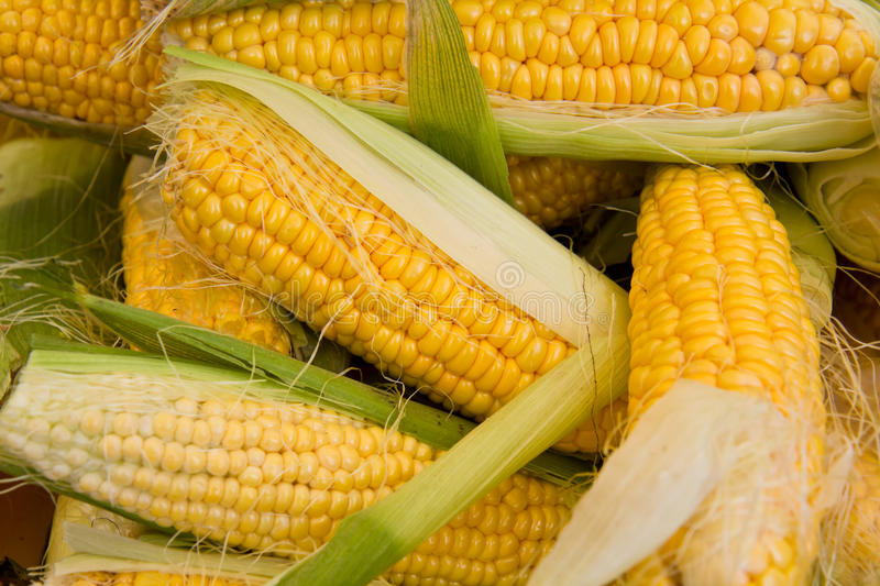 Download Bunch of corn on the cob stock image. Image of harvest - 15376859