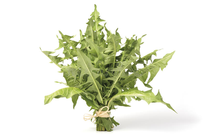 A bunch of Dandelion greens royalty free stock photography