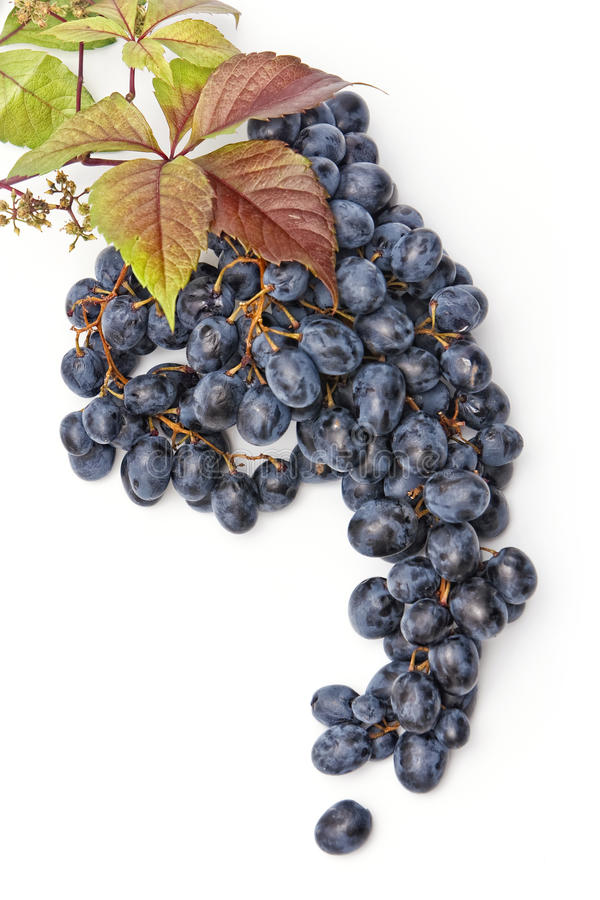 Bunch of dark blue grape. Bunch of raw dark blue grape on white background royalty free stock images