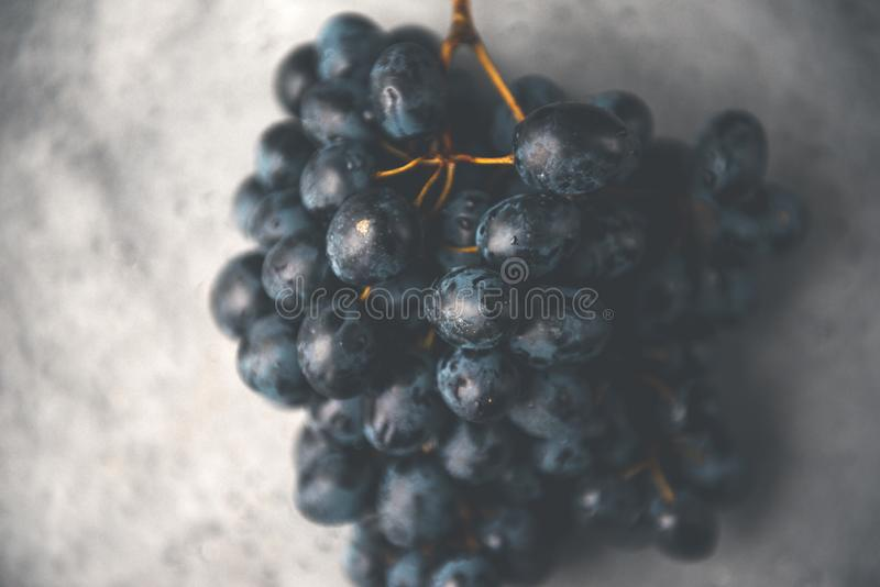 Bunch of dark grapes on a gray background, berries of sweet grapes royalty free stock photo