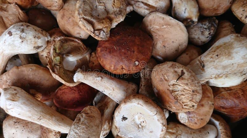 Bunch de hongos frescos imagenes de archivo
